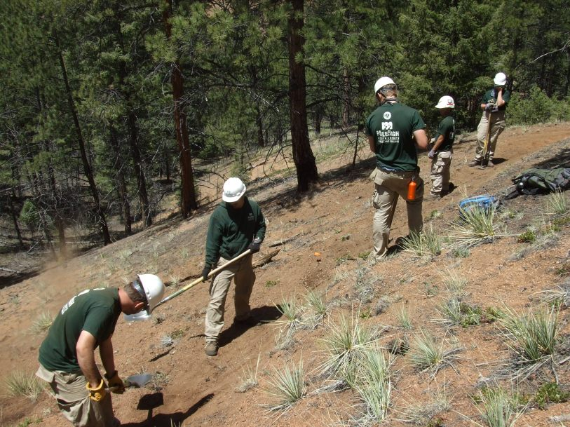 The Peregrines cut new OHV trail in Rampart Range during the first half of the summer.